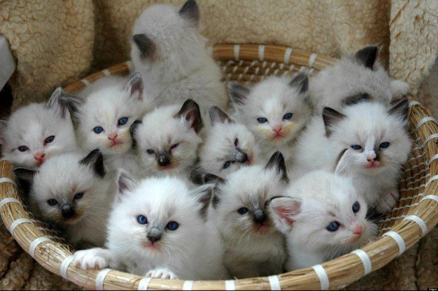 Zip Archive of Cats